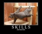 My Skills Results