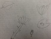 Flowers, by Ava