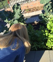 Mrs. Trott checks out a plant