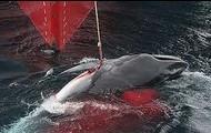 Caza de ballenas en Corea del Sur