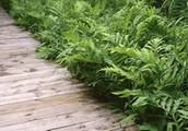 Our Wonderful Plants
