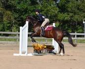 IEA Horse