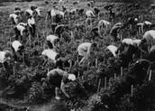 Russia's collective farms