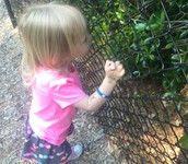 """On the playground,Addison said to me , """"We got a bug issue."""""""