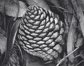 Pine Cone and Eucalyptus Leaves
