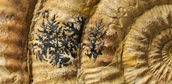 Fossils are important parts of history scientists value