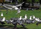 مراقبة الطيور