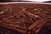 logs in the water