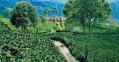 Tierra Fria Garden