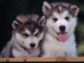I know someone won't kill a baby pup
