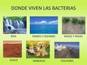 ¿Donde habitan  las Bacterias?