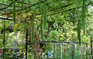 Create a zucchinni or cucumber arch