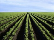 שטחים חקלאיים פתוחים