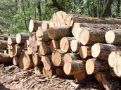timber one Brazil's many resource