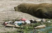 gallapagos pollution