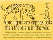 never keep a tiger as a pet