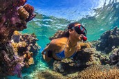 diver in the reef