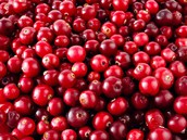 Northeastern cranberrys