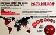 How many sharks are killed per year for their fins alone?