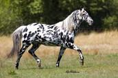 Beautiful Majestic Creatures.... Horses