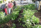 Permaculture - Considering Organic Gardening and People