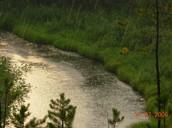 Rain in the Taiga
