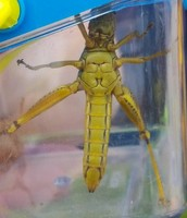 3 body parts + 6 legs = insect