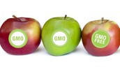 What ARE GMOs/GMFs?