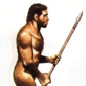 Mascle d'Homo erectus