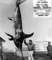 Biggest swordfish