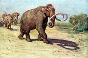 Mammoths In Their Environment