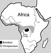 This Is A Diagram of Where Chimps Live