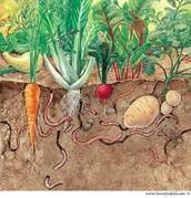 Earthworm Niche