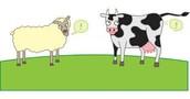 Cow Producing methane gas