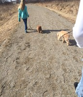 Cousins walking relatives dogs in the spring.