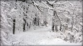 frosty footpath- winter snow
