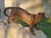 Thoughts on the Fossa