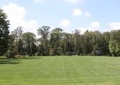 Our massive grass field