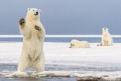 Help protect our oceans and take action to prevent Arctic drilling