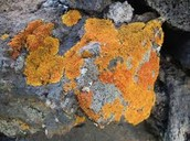 Chemical weathering (Oxidation)