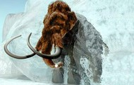 The Wooly Mammoth