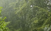 Blame it on the rain...