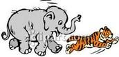 What is Tiger Kingdom / Elephant Kingdom ?