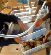 We are Making a Tidepool!