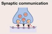 Synaptic: