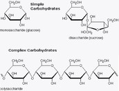 What is Simple Carbohydrates?