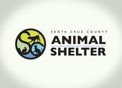 SCCAS (Santa Cruz County Animal Shelter )