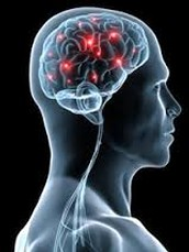 Diagnose, treat, and help prevent diseases and disorders of the nervous system.
