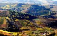ブリッコ・デル・ドラゴの畑