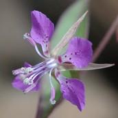 odd flower southwest